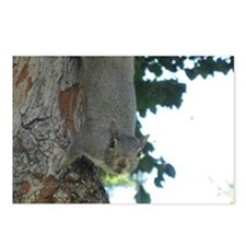 Treetop Squirrel Postcards (Package of 8)
