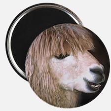 Ringo the Alpaca Magnet