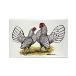 Silver Sebright Bantams Rectangle Magnet (100 pack