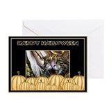 Cats Greeting Cards (10 Pack)