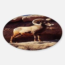 Ram Tough Oval Decal