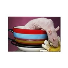 Aimee's rats nest Rectangle Magnet (10 pack)