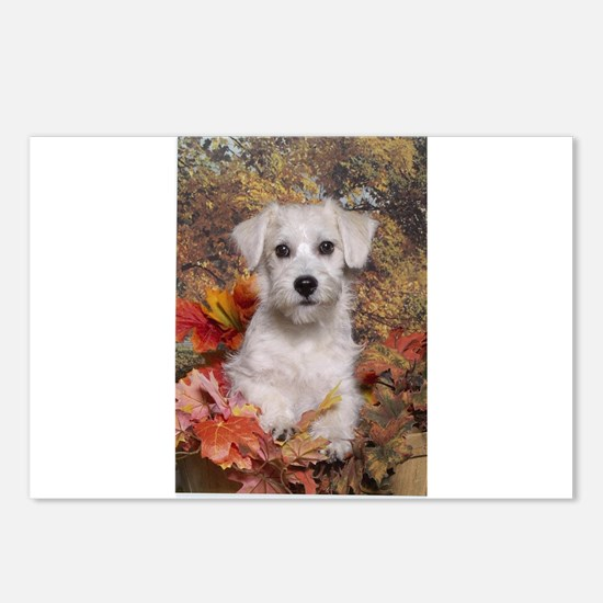 Schnoodle Time Postcards (Package of 8)