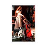 Accolade/Border Collie (Z) Sticker (Rectangle 50 p
