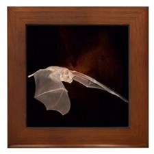 BAT Framed Tile