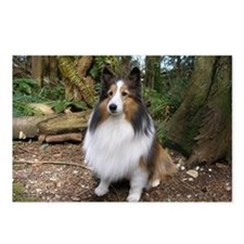 Sheltie Farm and Forest Postcards (Package o