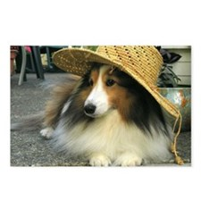 Sheltie Postcards (Package of 8)