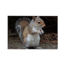 Rectangle Magnet cute squirrel