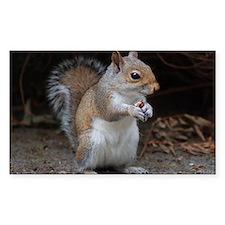 Rectangle Sticker 10 pk) cute squirrel