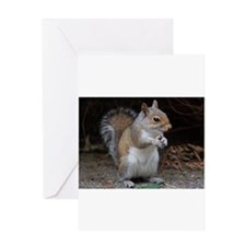 Greeting Card cute squirrel