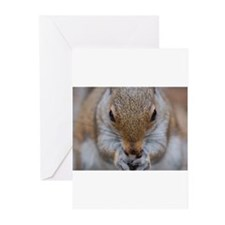 Greeting Cards (Pk of 10) cute squirrel
