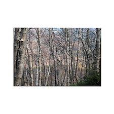 Birch Grove Rectangle Magnet