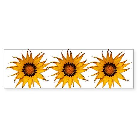 Gazania Daisy Flower ~ Wyldfyr Bumper Sticker