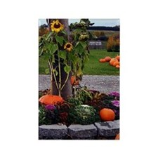 Fall Colors Rectangle Magnet