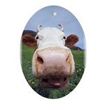 Cows Love you too! Oval Ornament