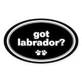 Labrador Single