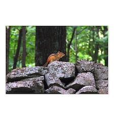 Cute Chipmunk Postcards (Package of 8)
