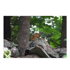 Chipmunk With Nut Postcards (Package of 8)