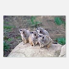 Meerkats Looking Left Postcards (Package of 8)