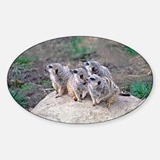 Meerkats Looking Left Oval Decal