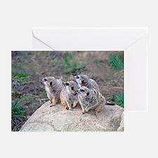 Meerkats Looking Left Greeting Cards (Pk of 10