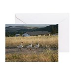 K.C.C.A. Greeting Cards (Pk of 10)