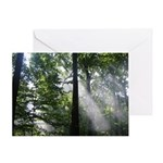 Light Through the Trees Greeting Card