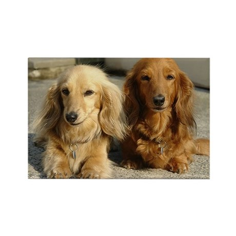Doxie Pair Rectangle Magnet (10 pack)