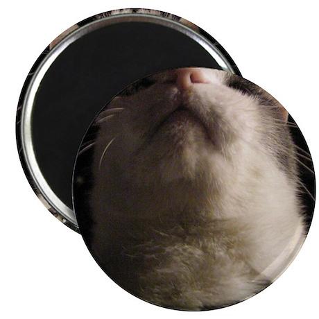 "IGOR 101 2.25"" Magnet (100 pack)"