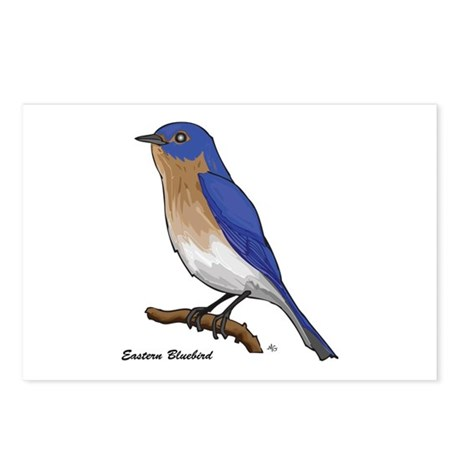 EASTERN BLUEBIRD 1a Postcards (Package of 8)