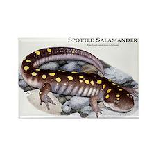 Spotted Salamander Rectangle Magnet