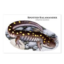 Spotted Salamander Postcards (Package of 8)