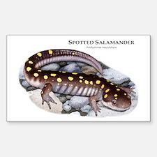 Spotted Salamander Sticker (Rectangle)