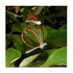Glass Wing Butterfly Tile Coaster