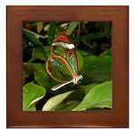 Glass Wing Butterfly Framed Tile