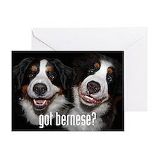 got bernese? Greeting Card