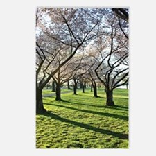 Cherry Blossom Postcards (Package of 8)