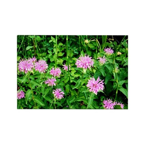 Wild Onion Bloom Rectangle Magnet