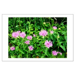 Wild Onion Bloom Posters