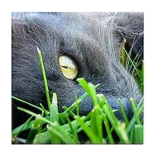 Cat Eye Tile Coaster
