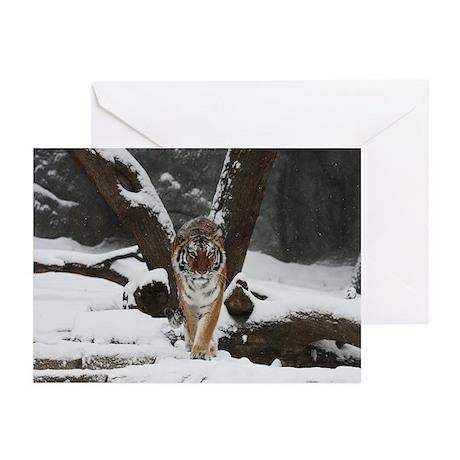 Greeting Cards (Pk of 10) - Tiger