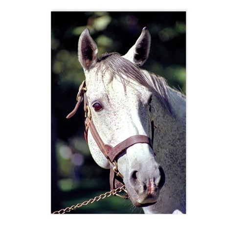 Spectacular Bid Postcards (Package of 8)