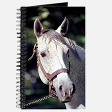 Spectacular Bid Journal