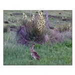 Jackrabbit & Yucca Small Poster