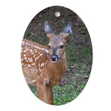 White Tail Oval Ornament