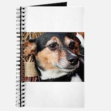 Buddy Fox Terrier Photo-9 Journal