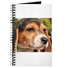 Chloe Beagle Photo-19 Journal