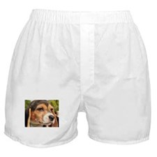 Chloe Beagle Photo-19 Boxer Shorts