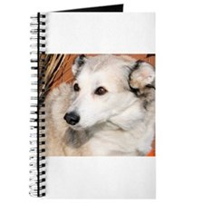 Lily Husky Terrier Photo-10 Journal