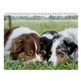 Miniature australian shepherd dog breed Calendars